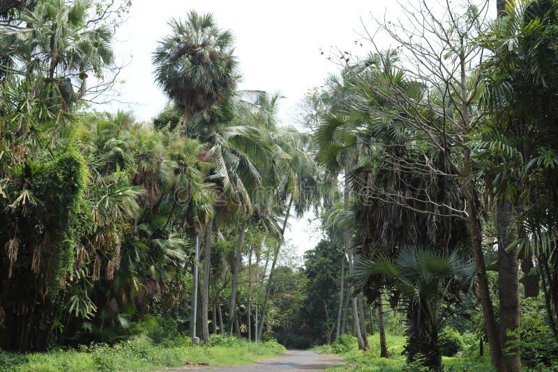 Route bétonnée par la forêt entre les palmiers image libre de droits