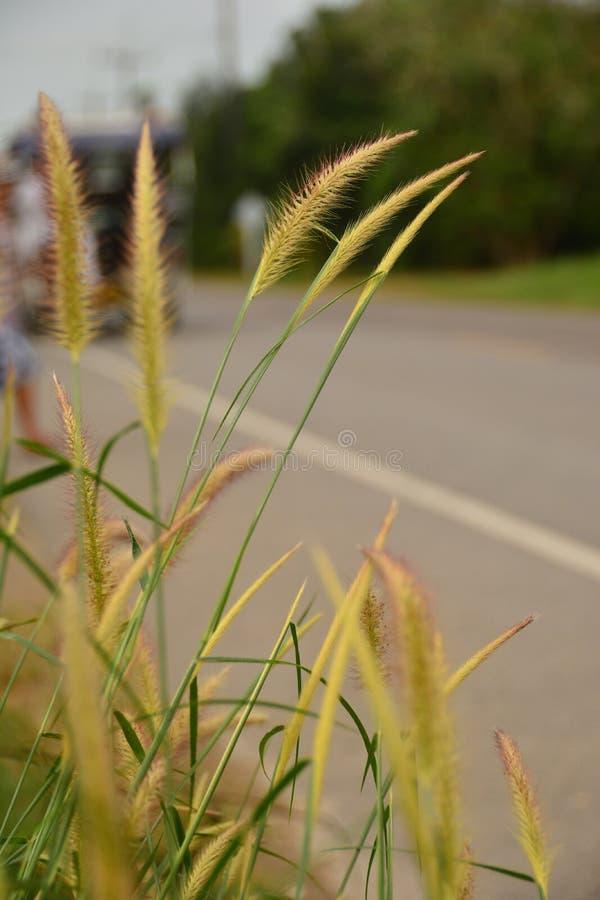 Route brouillée avec des fleurs d'herbe photographie stock