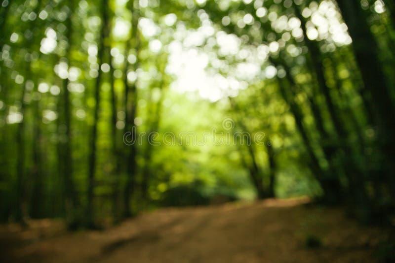Route brouillée dans la forêt image libre de droits