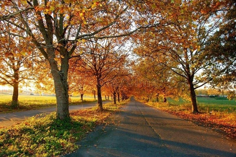 route contry d'automne photos stock
