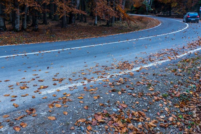 Route d'asphalte recouverte de feuilles jaunes, passant la voiture en arrière-plan photo libre de droits