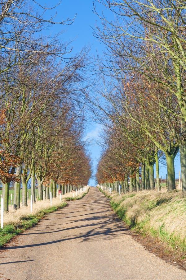 Route d'automne photos libres de droits