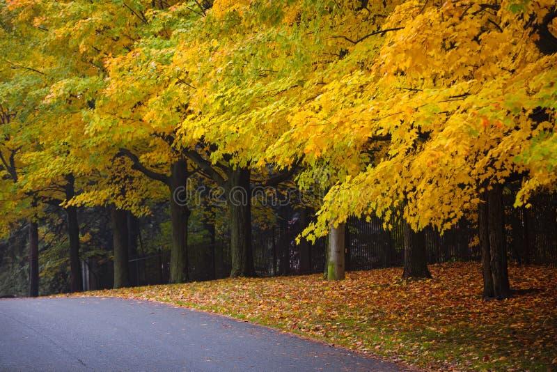 Route d'automne avec les arbres colorés images libres de droits