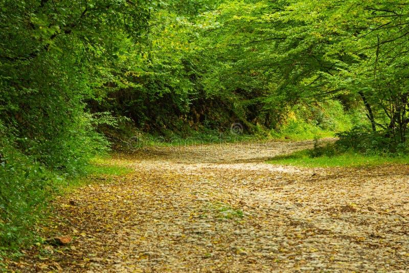 Route d'aventure images libres de droits