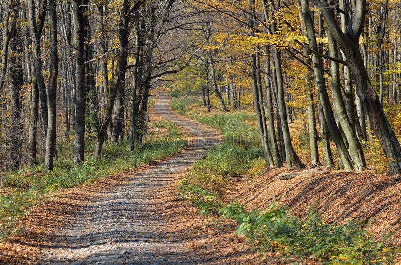 Route d'enroulement dans la forêt photo libre de droits