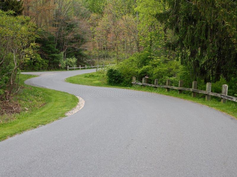 Route d'enroulement dans la forêt verte photos libres de droits