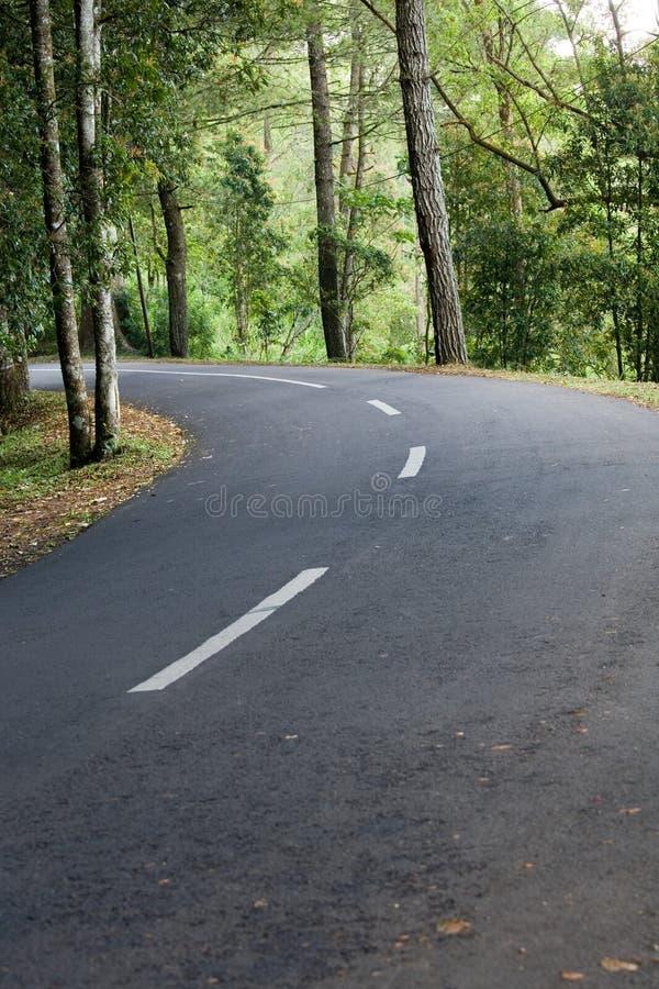 Route d'enroulement dans les bois photographie stock