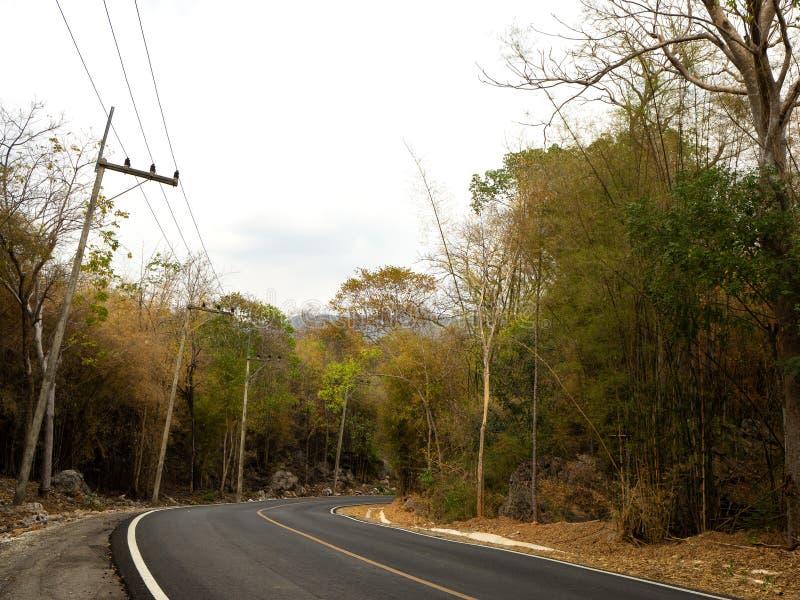 Route d'enroulement dans une forêt verte luxuriante images stock