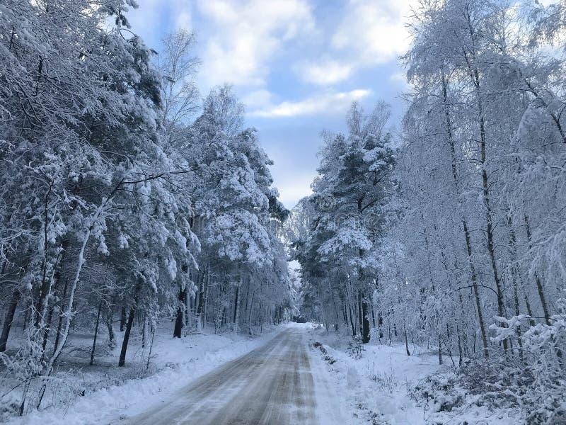 Route d'hiver dans la forêt photos libres de droits
