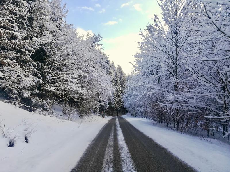 Route d'hiver dans les bois photographie stock