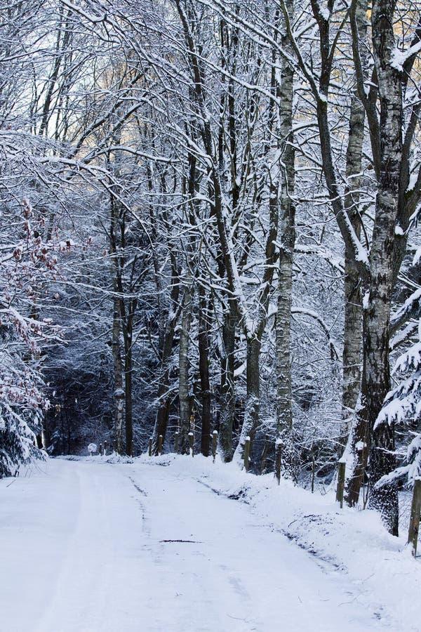 Route d'hiver de Milou photo libre de droits