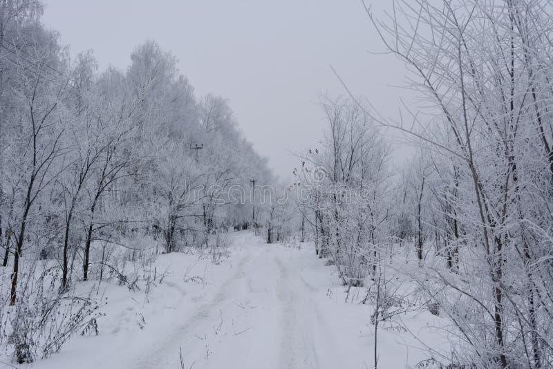 Route d'hiver de Milou dans la forêt avec des arbres couverts par la gelée photo libre de droits