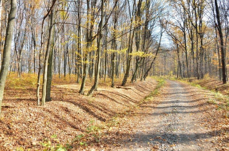 Route dans la forêt photos stock