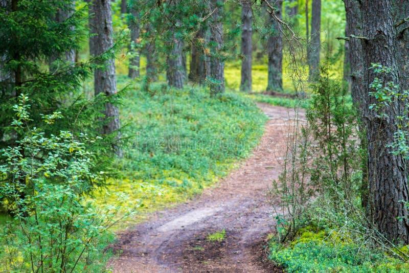 Download Route dans la forêt image stock. Image du saisonnier - 77158729