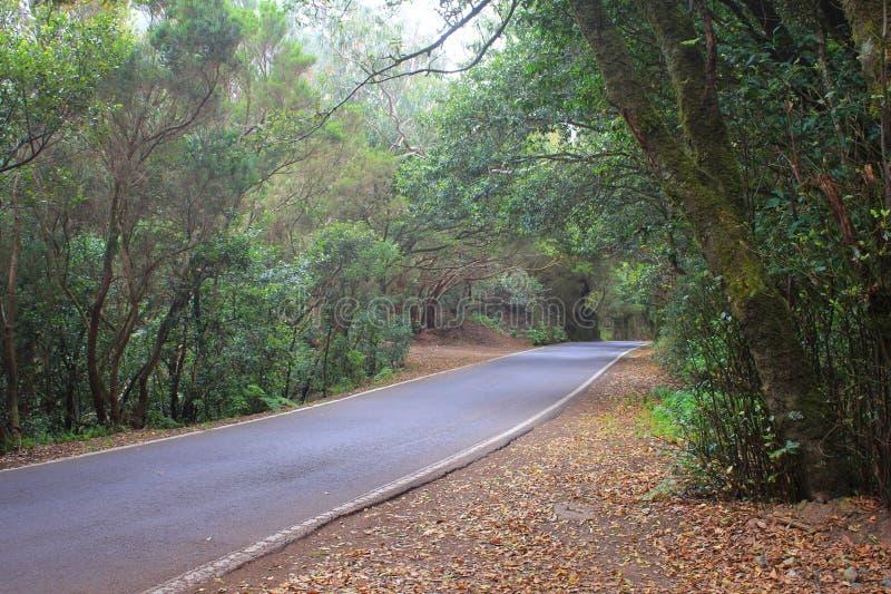 Route dans la forêt Anaga image stock