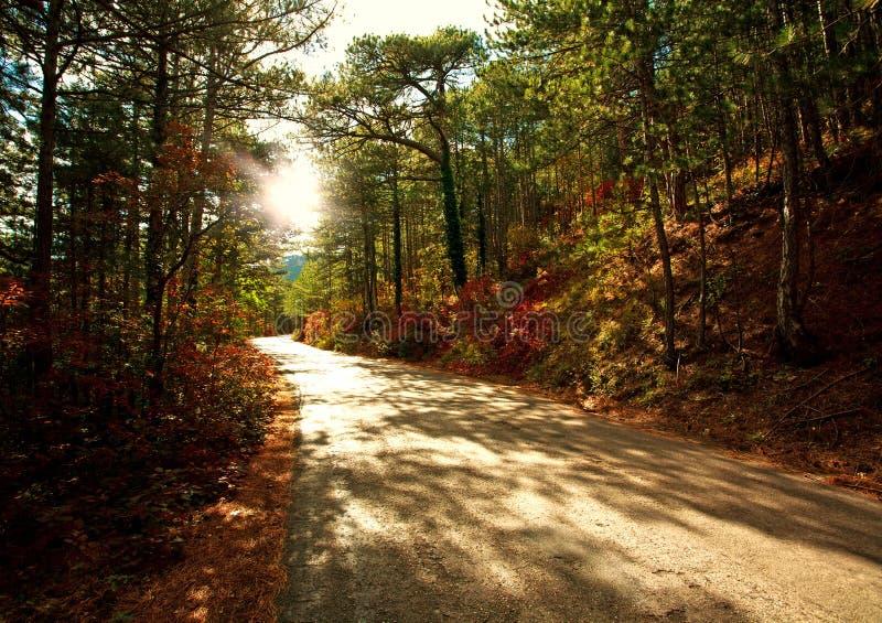 Route dans la forêt d'automne à la lumière du coucher de soleil photographie stock libre de droits