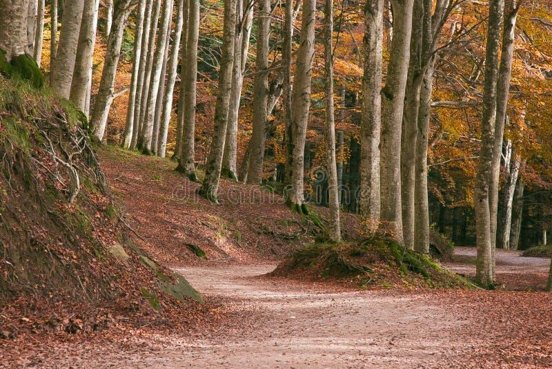 Route dans la forêt d'automne, Toscane image libre de droits