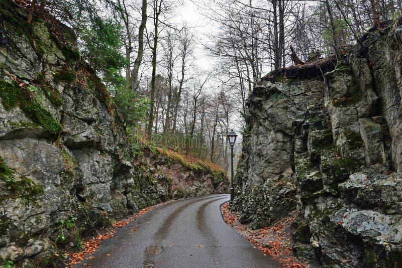 Route dans la forêt près du château de Hohenschwangau en Allemagne images stock