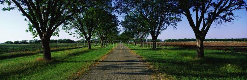 Route dans la plantation de Boone Hall, Sc photographie stock libre de droits