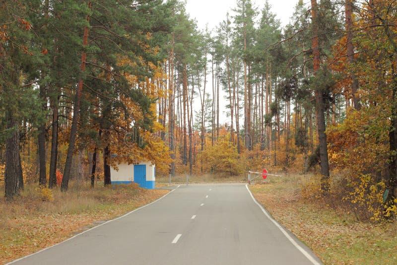 Route dans la plantation de woods photographie stock