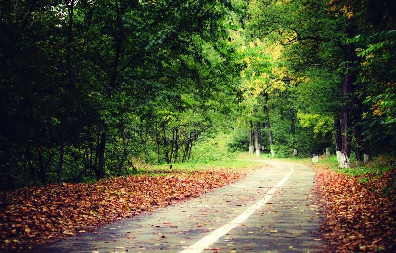 Route dans le llandscape d'automne de forêt d'automne avec les feuilles tombées B image stock
