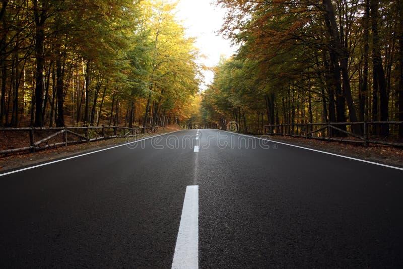 Route dans les bois avec des couleurs d'automne d'automne image stock