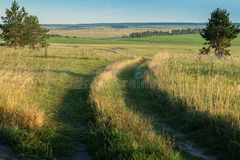 Route dans un domaine avec l'herbe Près du pin images stock