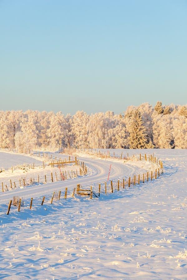 Route dans un paysage d'hiver image libre de droits