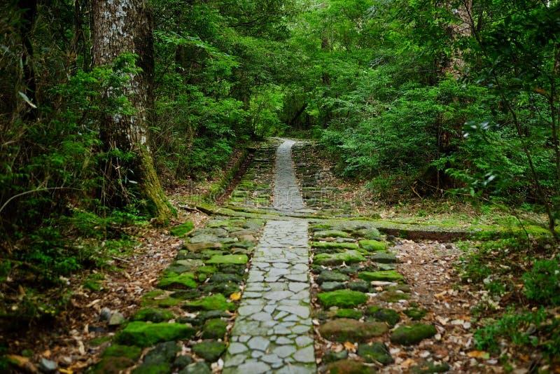 Route dans une forêt image libre de droits