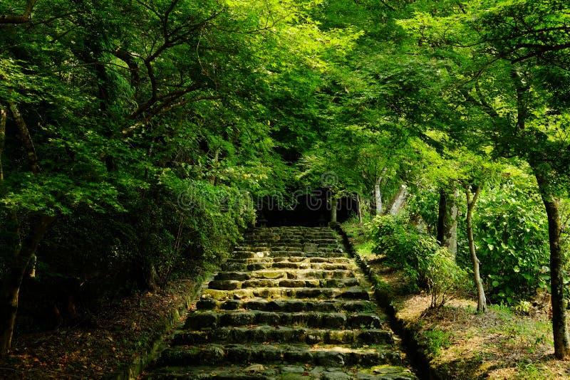 Route dans une forêt photos stock