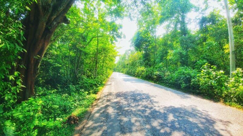 Route de Bequtiful dans le bangla de forêt photographie stock libre de droits
