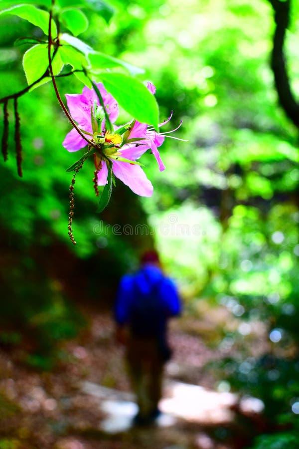 Route de camélia et de montagne photos stock