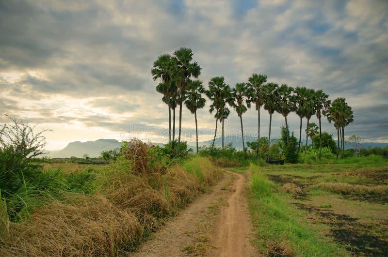 Route de campagne à mettre en place au fond de palmiers et de montagnes de sucre images stock