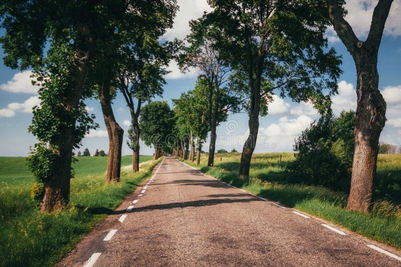 Route de campagne allant par l'allée d'arbre photo stock