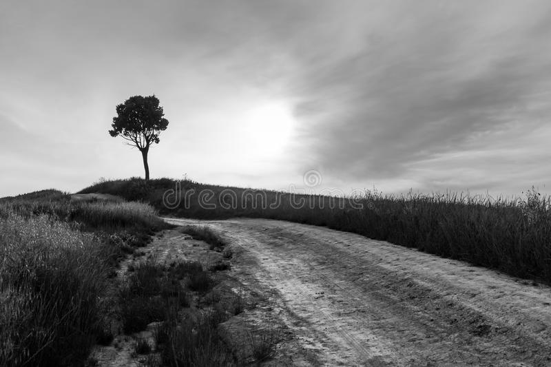 Route de campagne avec l'arbre isolé dans le paysage de la Toscane image stock