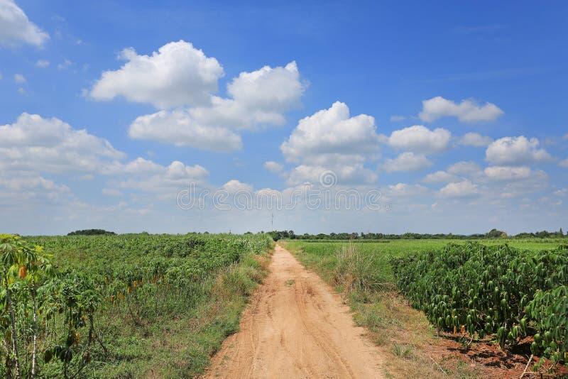 Route de campagne dans le domaine de plantation de manioc image stock