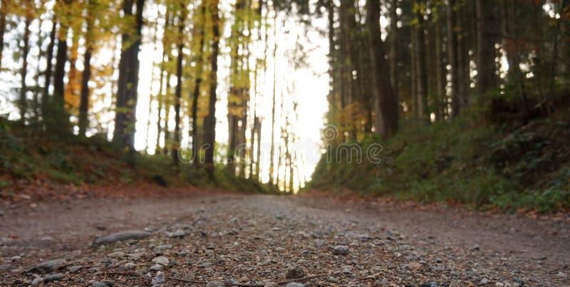 Route de campagne dans les montagnes photo libre de droits