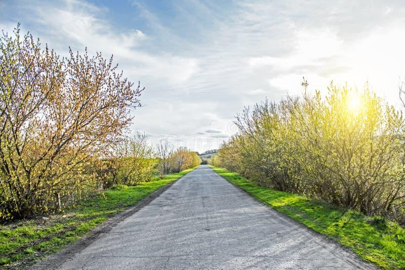 Route de campagne par la forêt et les champs verts image stock