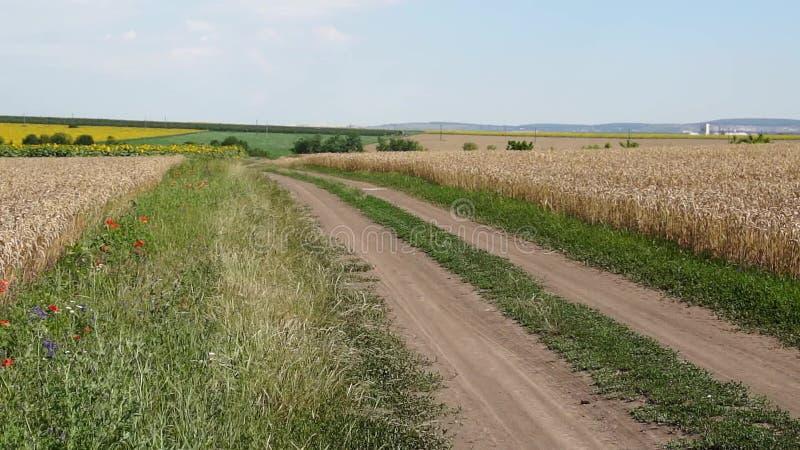 Route de campagne près du champ de blé banque de vidéos