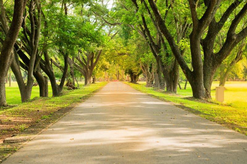 Route de campagne rayée par arbre photo libre de droits