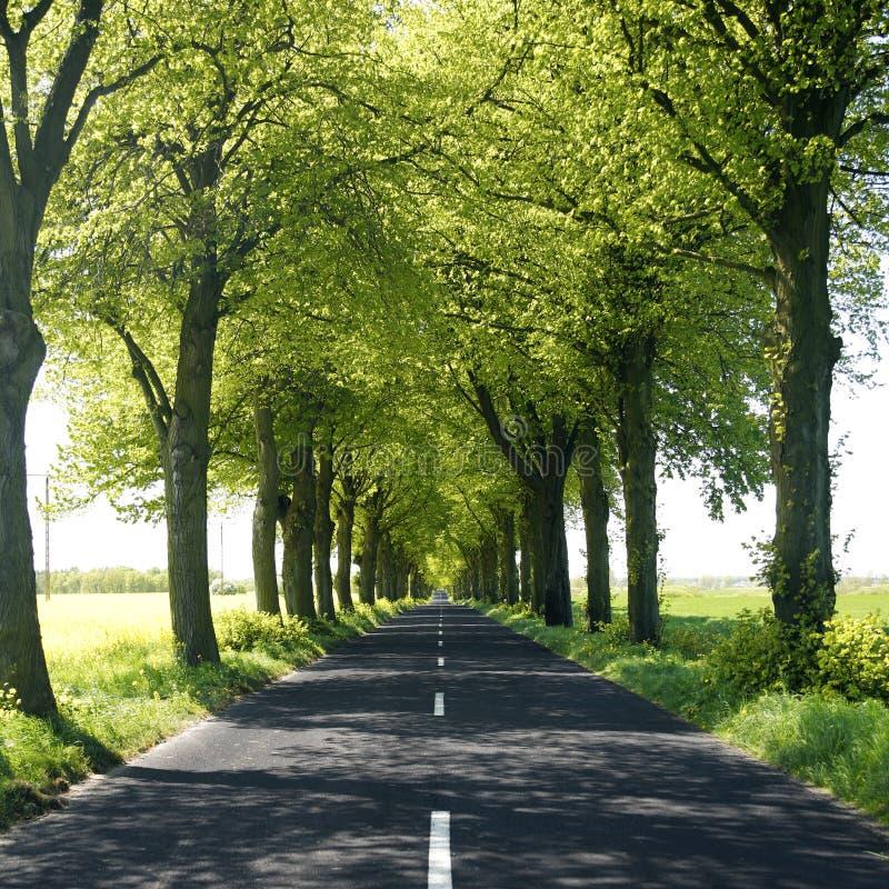 Route de campagne rayée par arbre photographie stock