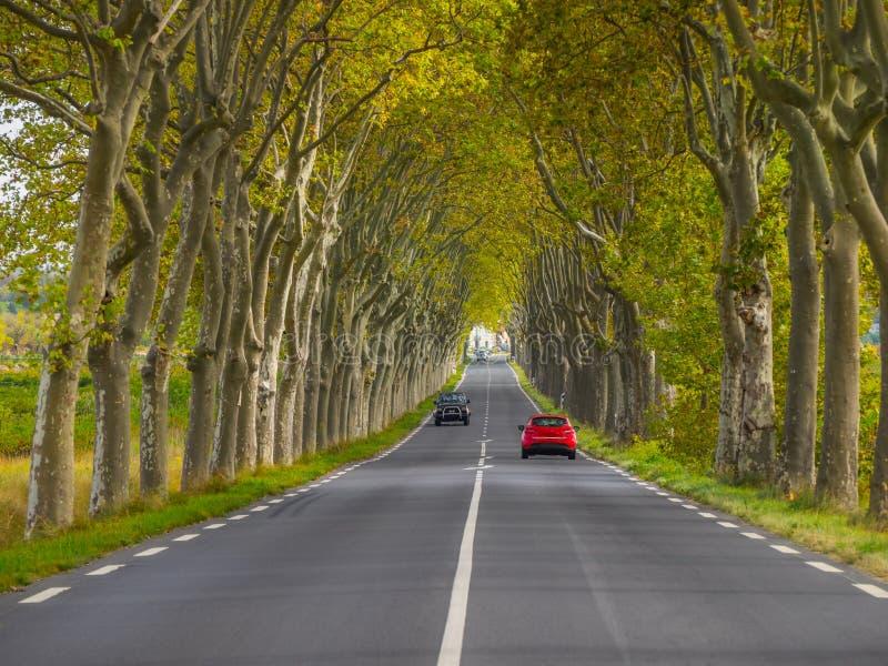 Route de campagne rayée par arbre photos libres de droits