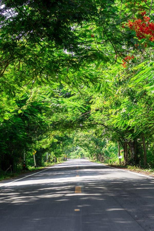 Route de campagne ray?e par arbre photos stock