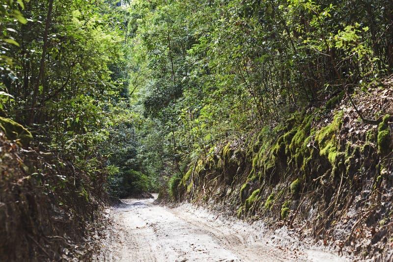 Route de forêt tropicale de QE fi image stock