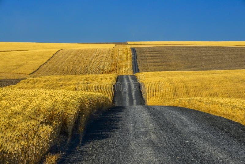 Route de gravier par des champs de blé image stock