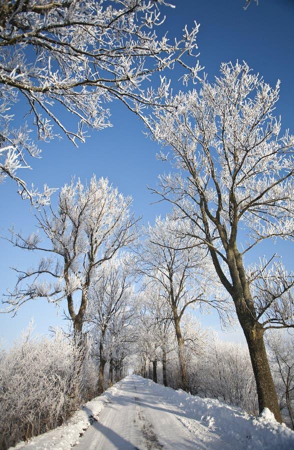 Route de l'hiver et arbres givrés par horizontal images stock