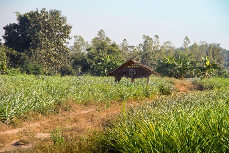 Route de la Thaïlande de jungles d'abri image libre de droits