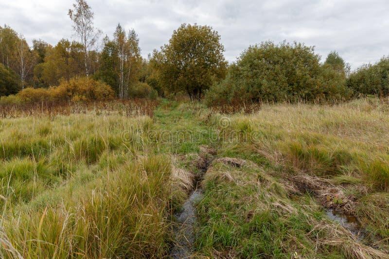 Route de mère patrie au bord de la forêt photo libre de droits