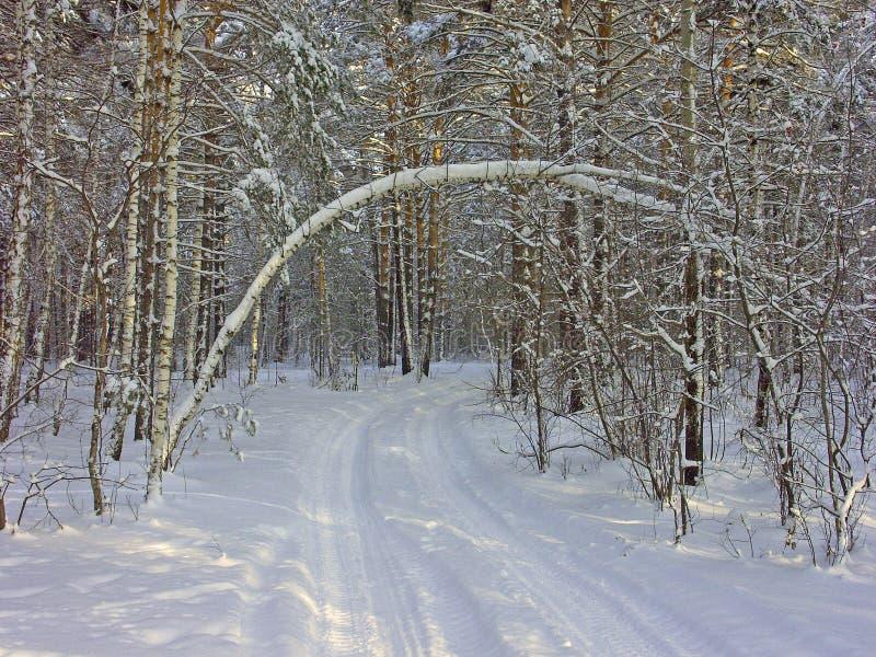Route de Milou dans la forêt photos stock