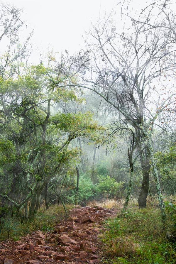 Route de montagne brumeuse et rocheuse photographie stock libre de droits